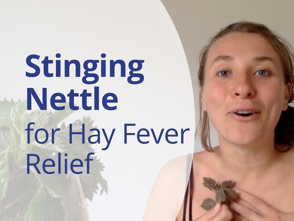How to Relief Hay Fever with Stinging Nettle