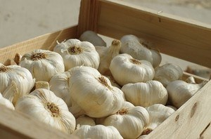 Ginger and garlic - garlic cloves